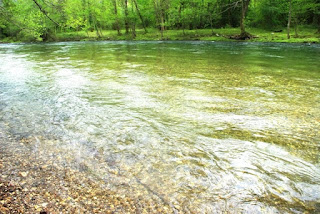 río Narcea, coto de Las Mestas