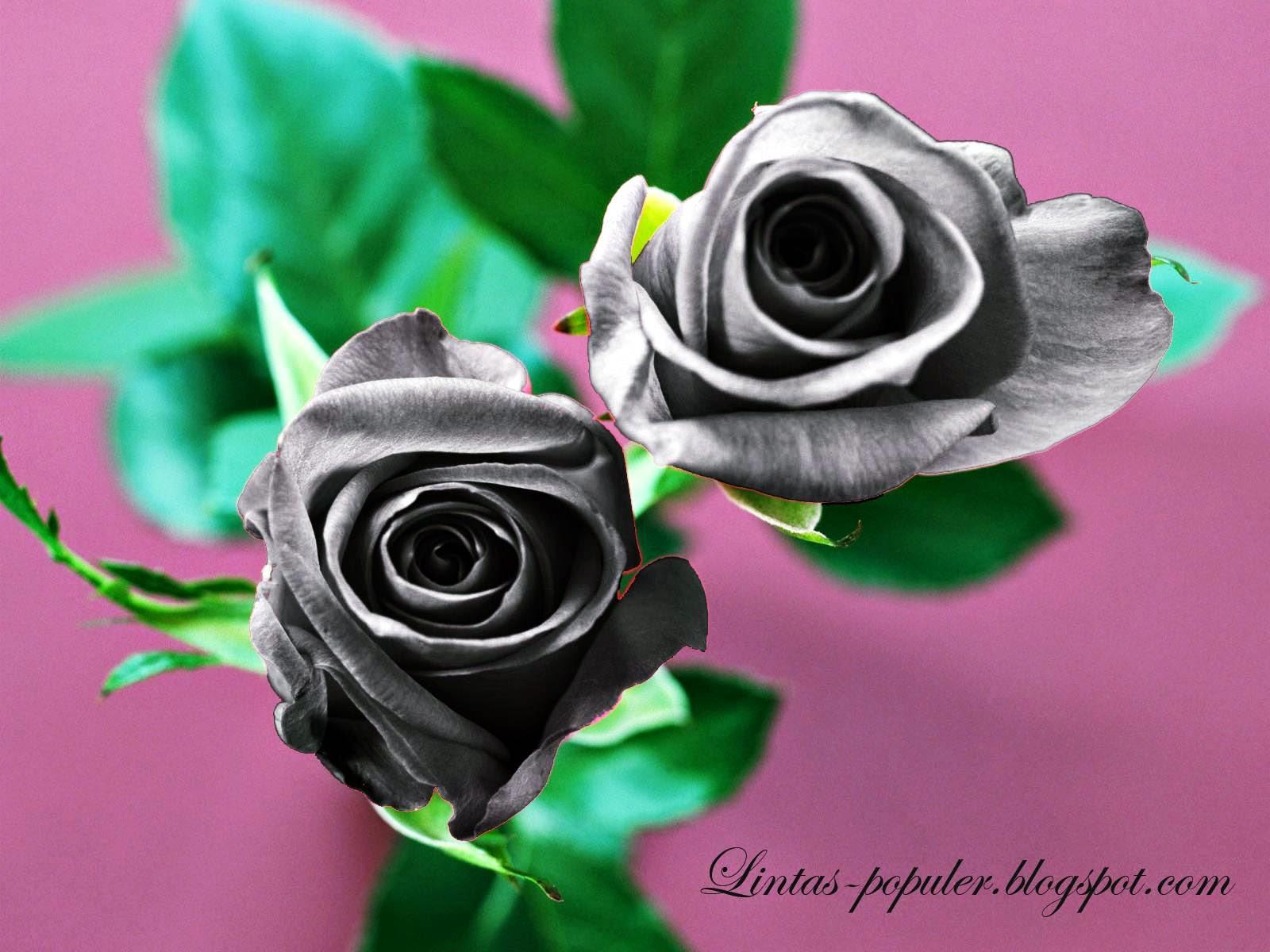 Gambar Wallpaper Bunga Mawar Hitam Cantik Caption Instagram