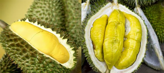 Manisnya Durian Asli Sungayang Tanah Datar