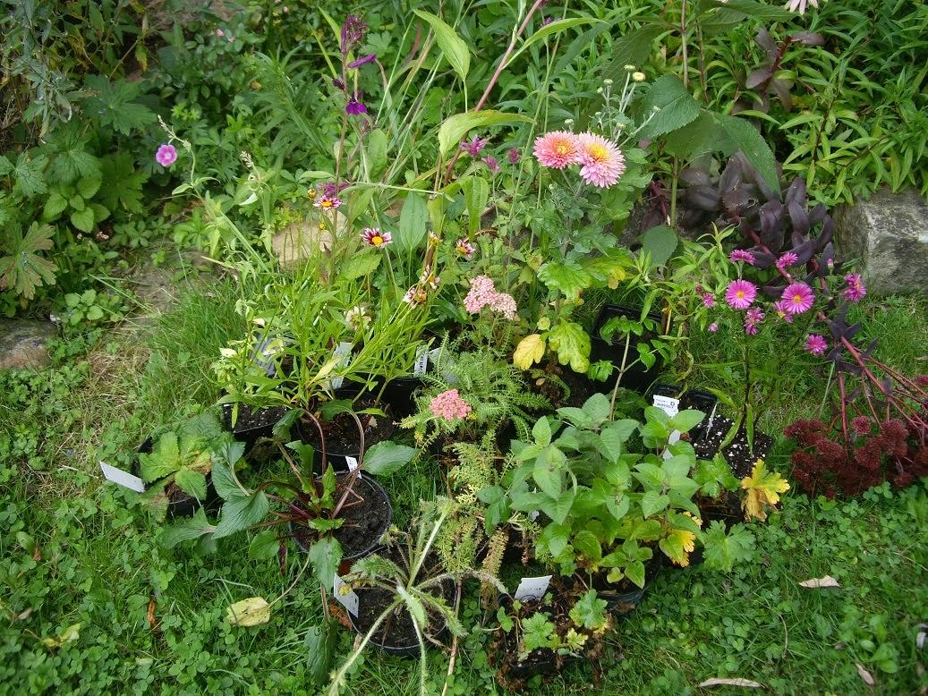 Derri re les murs de mon jardin achats d automne chapitre 2 accord abricot pourpre - Derriere les murs de mon jardin ...