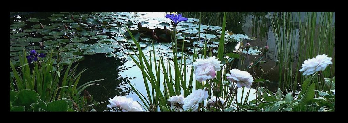 Chez Zeph - Un petit jardin du Nord-Isère