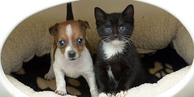 Cute Puppy and Kitten Photos
