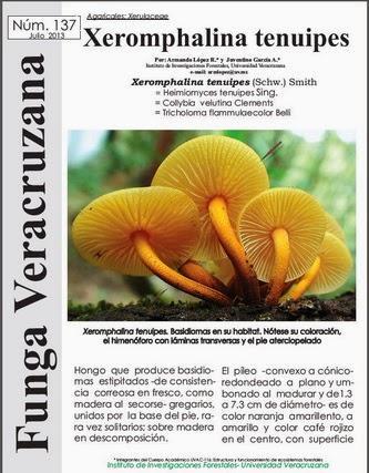 http://www.fungavera.com/fungavera/funga%20pdf/137_Xeromphalina%20tenuipes.pd