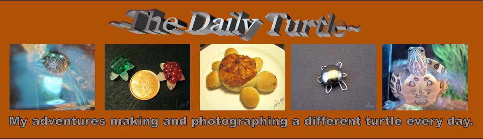 ~The Daily Turtle~