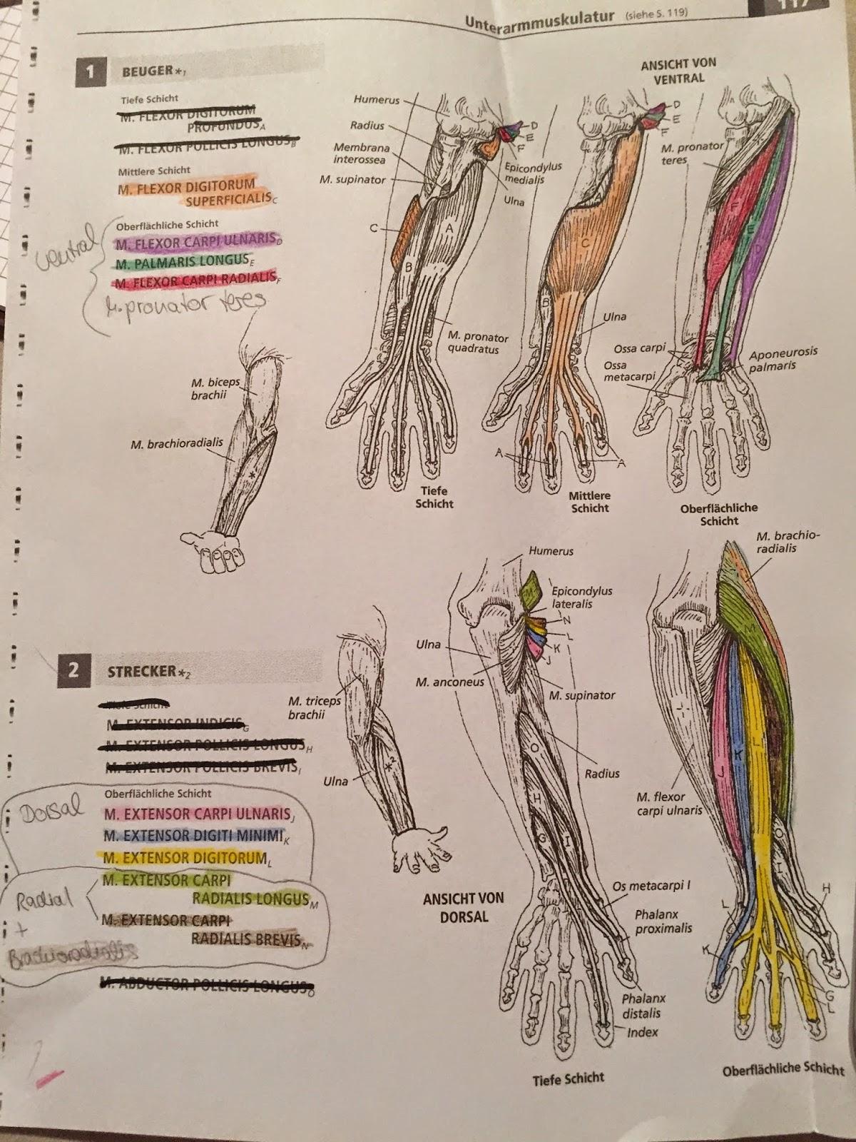 Ziemlich Beste Anatomie Und Physiologie Malbuch Bilder - Malvorlagen ...