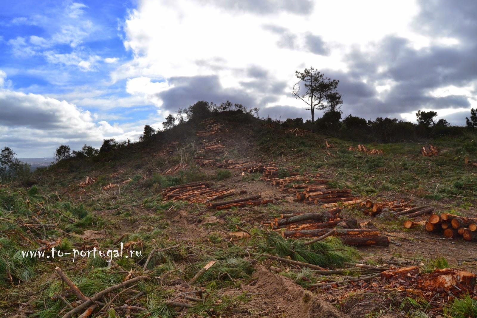 леса в Португалии