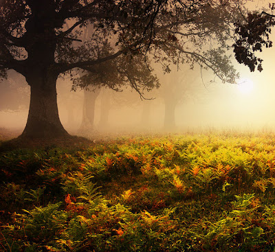 Fotografías del Bosque Lugares para Caminar y Respirar
