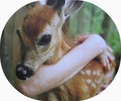 Villa Maresilla En contra del maltrato y abandono a los animales