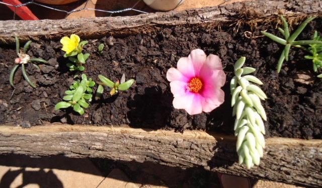 meu quintal meu jardim : meu quintal meu jardim:Jardim de Emoções: belezas do meu quintal