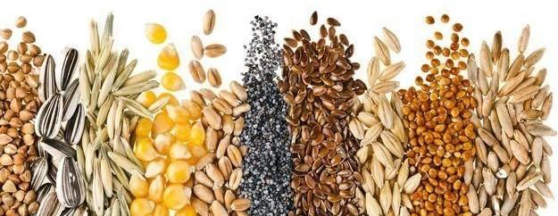 semi oleosi, semi di lino, semi di girasole, semi di sesamo, cura dei capelli