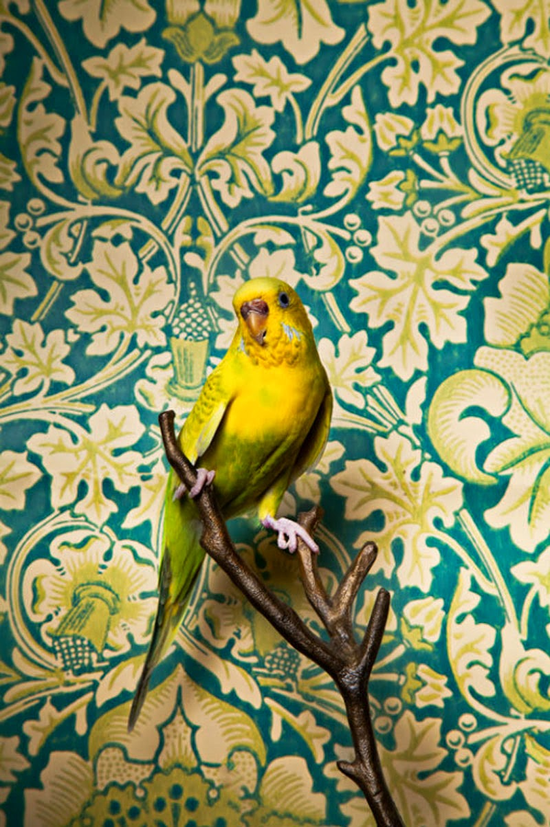 Birds of a Feather de Claire Rosen