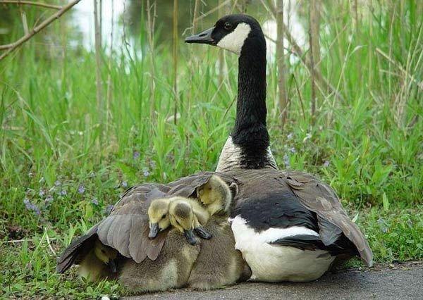 inan%25C4%25B1lmaz+hayvan+resimleri İnanılmaz hayvan resimleri vahşi hayat.