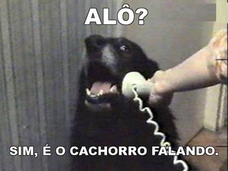 Cachorro atendendo o telefone