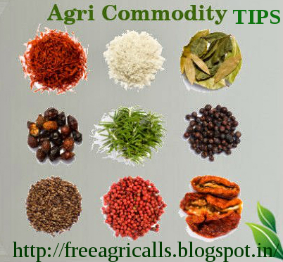 McX tips Services , agri commdity tips, mentha oil live rate , Chana Tips, SoyaBean  Tips, Dhaniya Tips, Turmeric Tips