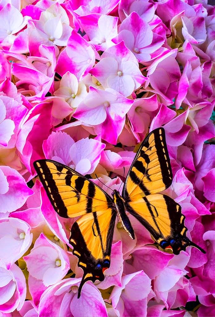 flores-y-mariposas-amarillas