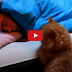 funny Cat Awake sleepy Boy