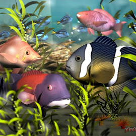 gambar beautiful colourful fish desktop wallpaper gambar cupang hias