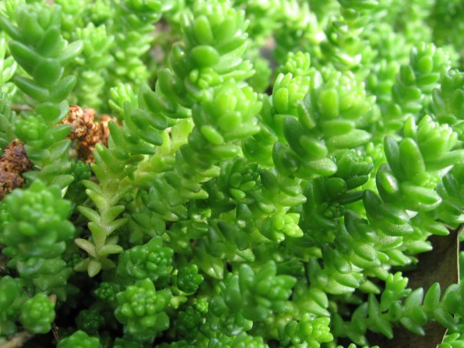 Красота растений летом 434