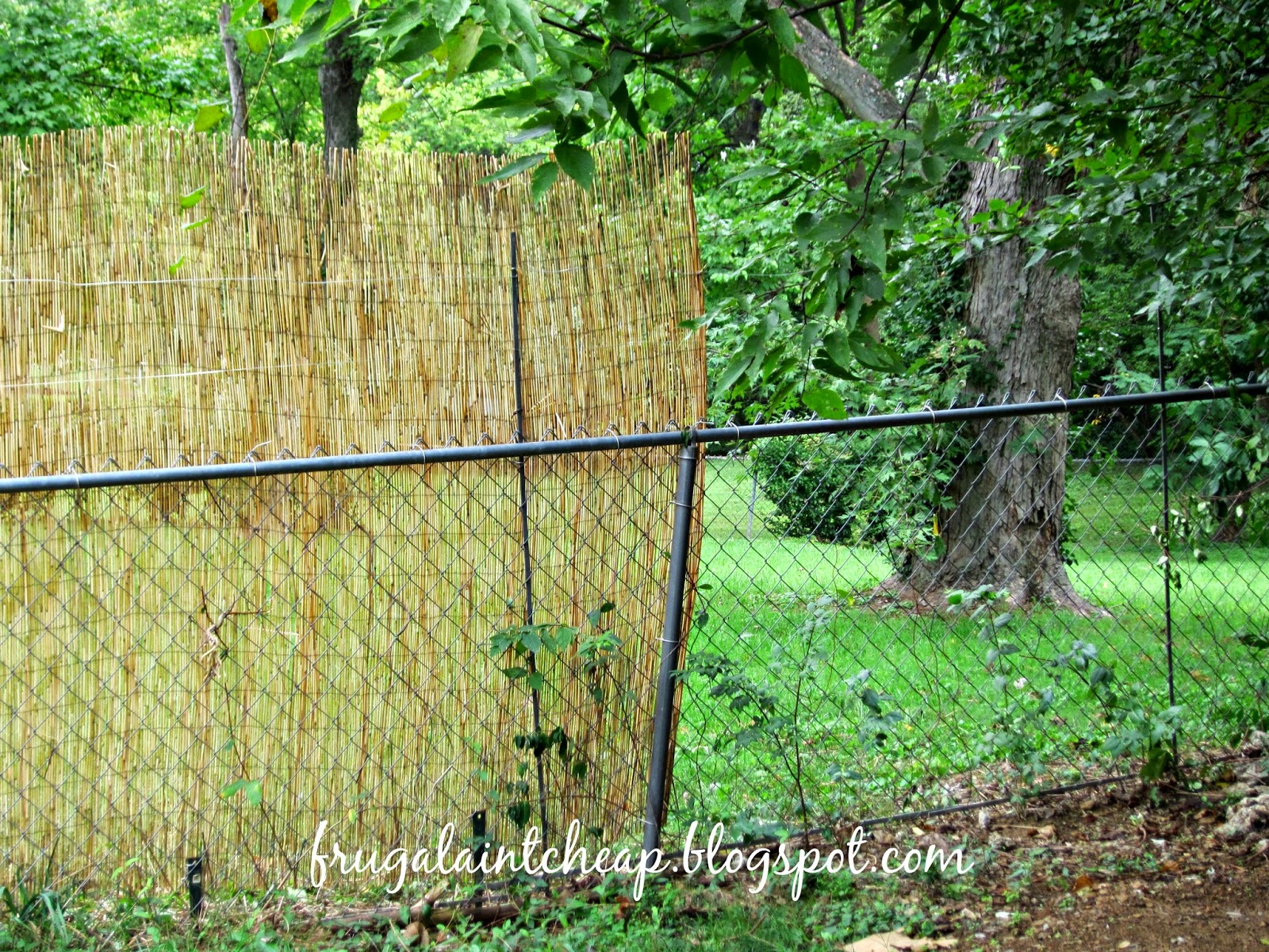 Frugal aint cheap chain link fence project i then added metal wire connecting the polesstakes to give it extra stability baanklon Images