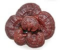 เห็ดหลินจือ(Lingzhi Extract)