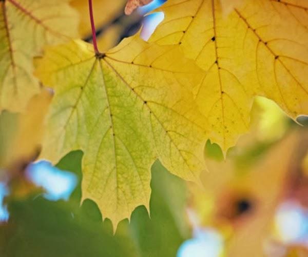 Autumn Leaf ~ Photography by Lori H. #autumn #leaf