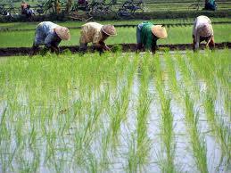 Pengertian Petani Pertanian Organik Dan Pertanian Modern