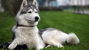 Jenis Anjing Peliharaan