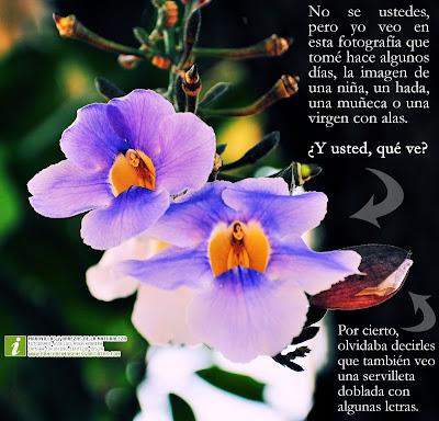 ></a><br><center>Me gustaría recibir sus comentario sobre esta <b>fotografía de la flor</b>. Haga usted clic sobre la imagen para ampliar su tamaño y <a href=