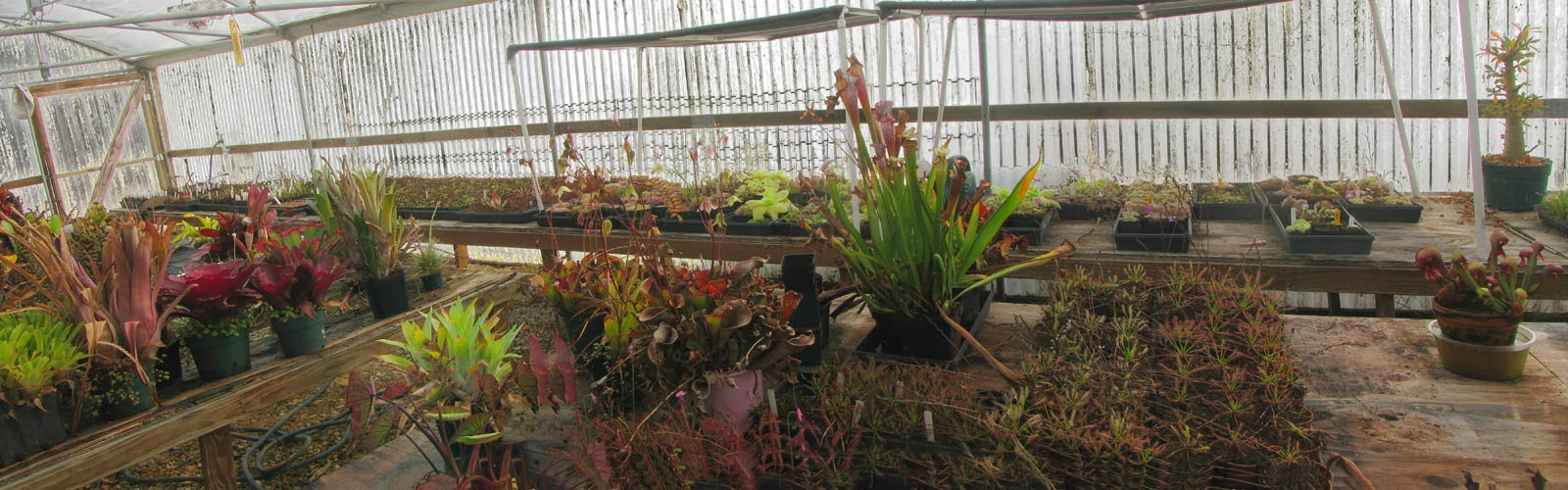 Mesa Exotics greenhouse panorama shot