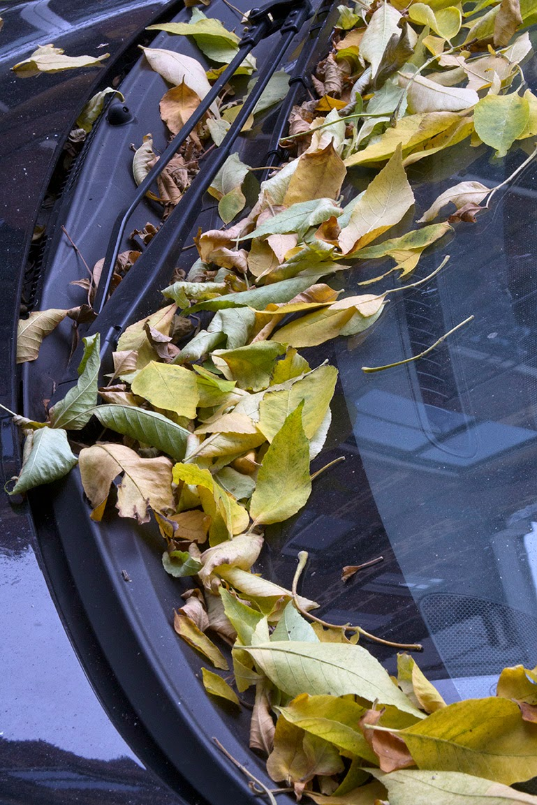 lots of leaves on black car