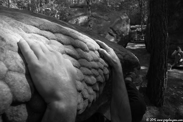 Bossettes de grès de Fontainebleau, Isatis, (C) 2015 Greg Clouzeau