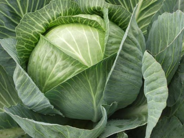 Салат из белокачанной капусты