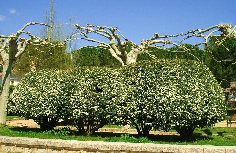 Notas de campo y jard n setos de jardines 2 aut ctonas for Arbustos perennes para jardin