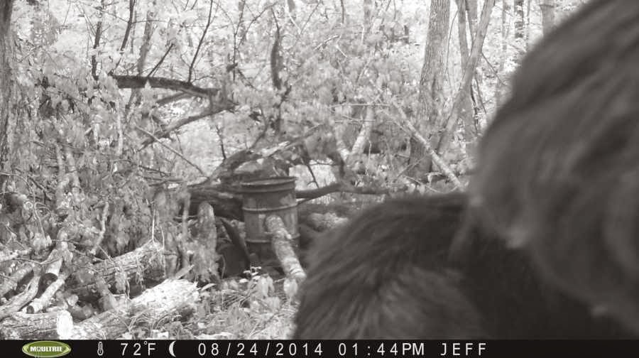 Trail Cam Bigfoot