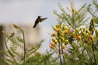 mexican bird paradise