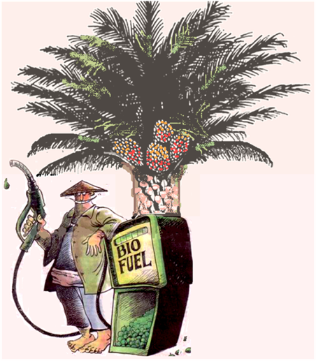 palm biodiesel The demand of increasing price in fossil fuel has prompted the global oil industry to look at the alternative sources of fuel from renewable energy source which is.