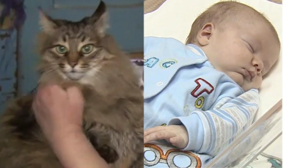 Subhanallah Kucing selamatkan bayi yang dibuang