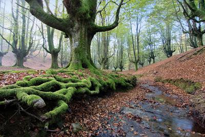 De regreso al bosque encantado - Returning to enchanted forest