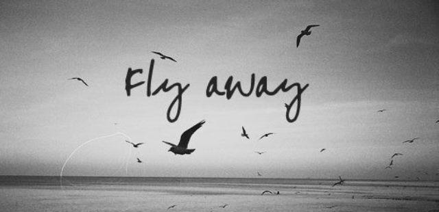 Kuş gökyüzü