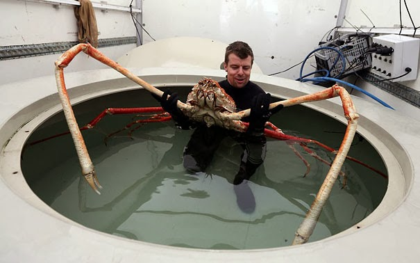 Japanese Spider Crab - 22 Bizzarre Animals You Probably Didn't Know Exist