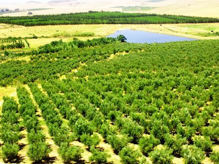 prophet muhammad trees environment madinah saudi arabia