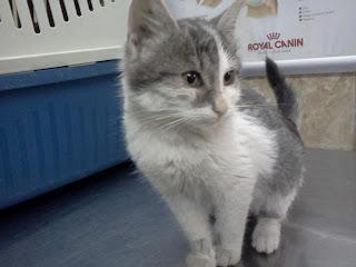 Pisica haioasa Kitty spre adoptie 3