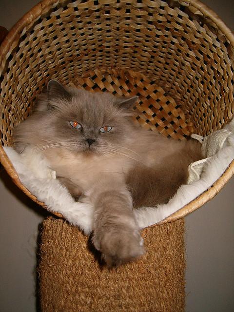 Rbol rascador de sisal con una cesta de mimbre de ikea for Cestas mimbre ikea