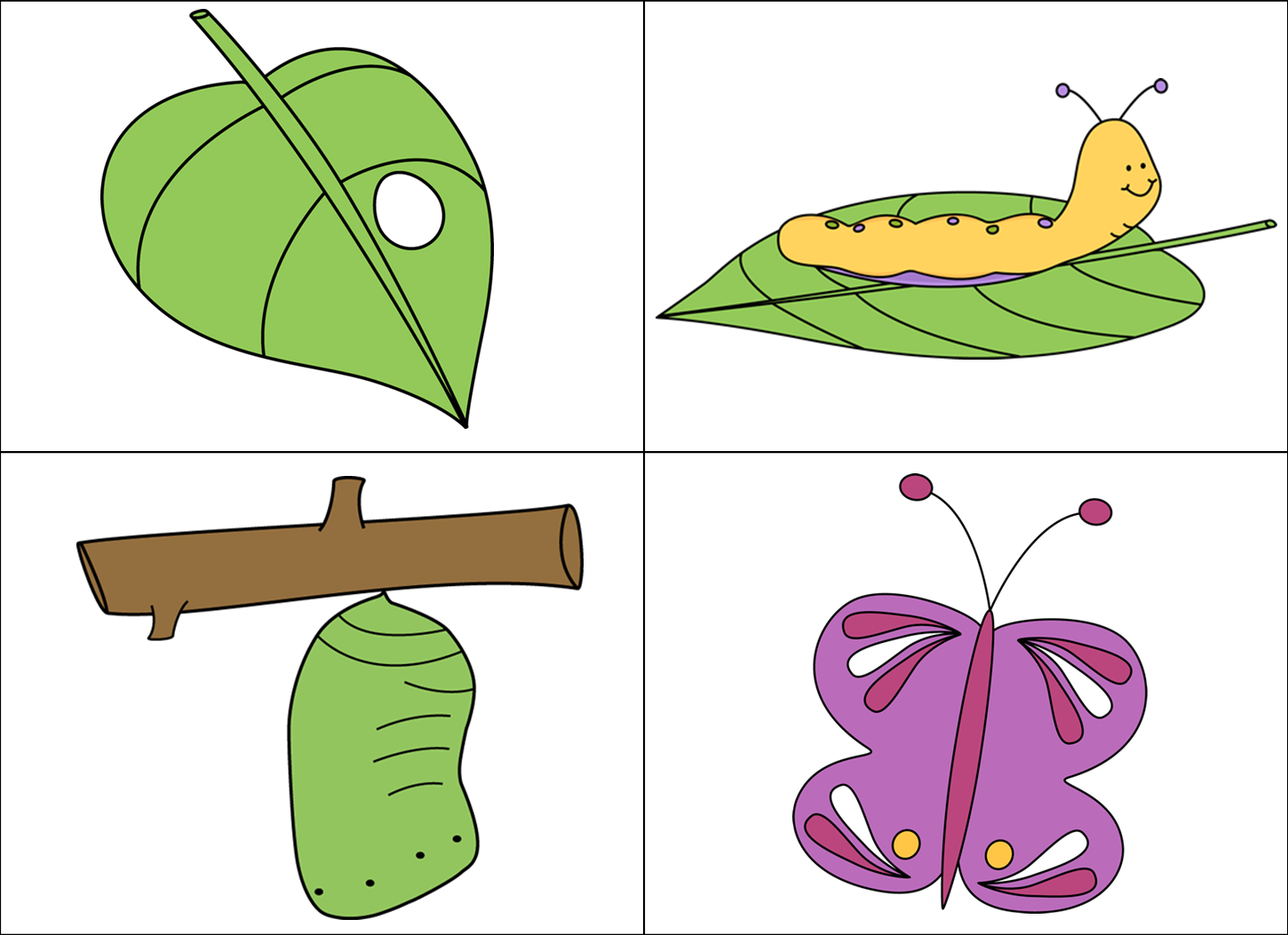 butterfly pupa clipart