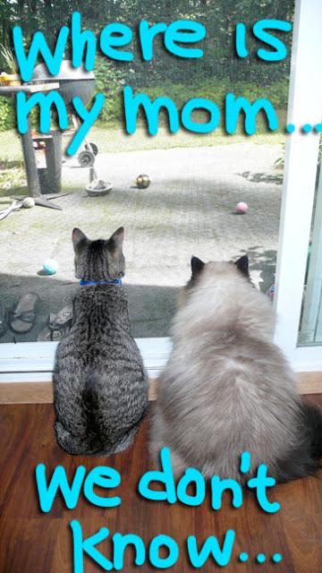 cats-waiting