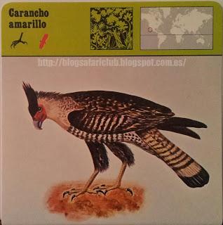 Blog Safari club, el Carancho amarillo, ha sido exterminado por personas que se calificaban de ornitólogos