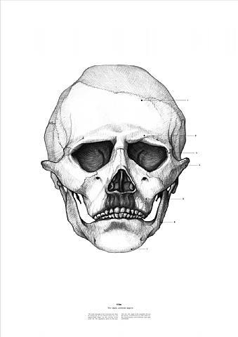 Doctor Ojiplático. Istvan Laszlo. Cráneos Célebres