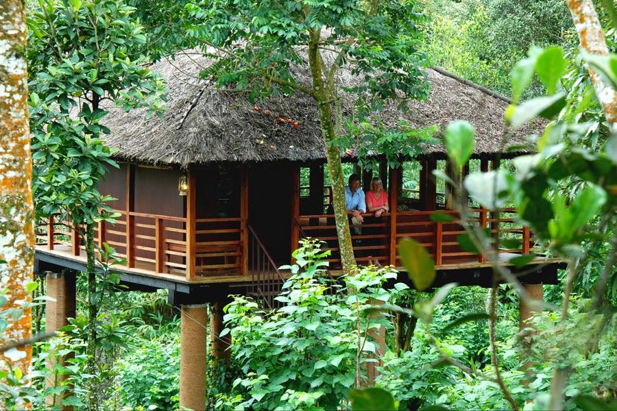 kerala-tree-hoouse-vythiri-wayanad
