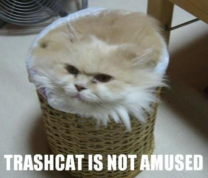 Funny Picture Humor: Crazy Funny Cat Pics