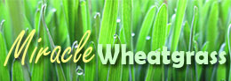 Miracle Wheatgrass